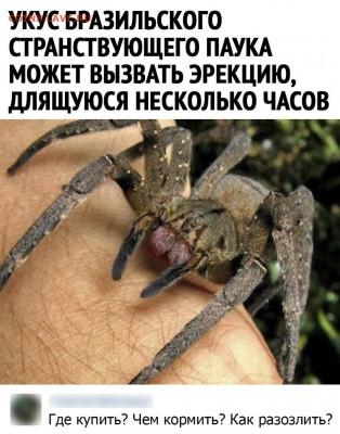 юмор - Yp_CSeOMjcA