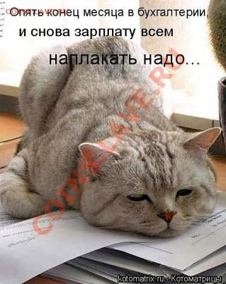 юмор - кот наплакал