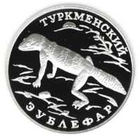 Туркменский эублефар реверс