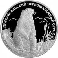 Прибайкальский черношапочный сурок реверс